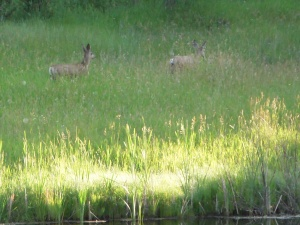 sparkles close deer